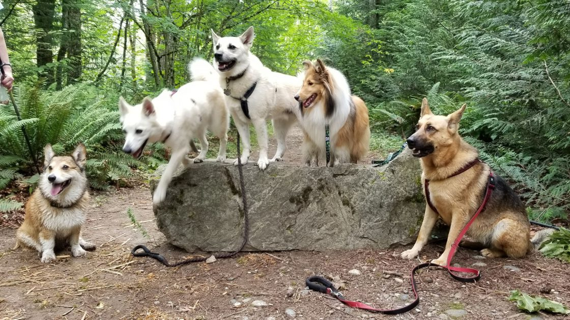 hiking-with-dogs_join-a-meetup-pet-group